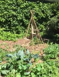 grow food everywhere: This easy to construct teepee makes use of vertical space to help you grow more food