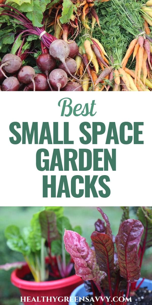grow food in a small space garden -- pin with photo of pile of root veggies and pots of swiss chard with title text