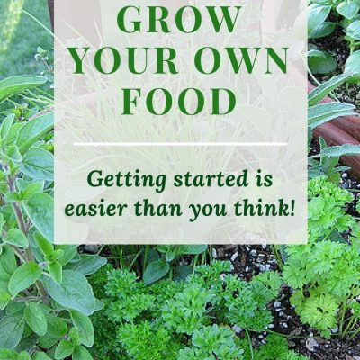 Grow your own food -- it's really easy to get started! Find out how easy it is to get started growing your own food. Save money on healthy food! Click to read more or pin to save for later. |food growing | beginner gardening |