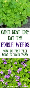 Edible weeds! Is your yard overrun by dandelions? Purslane? Don't despair. Enjoy the free food! Yup, you can eat them! Click to read more or pin to save for later. | foraging | edible weeds | frugal living | healthy food |