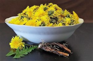 edible weeds --photo of bowl of dandelions