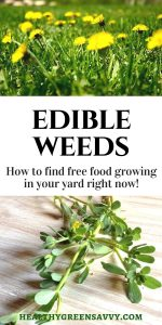 Weeds you can eat! Did you know many common weeds are edible -- AND delicious? Also very nutritious! Is your yard overrun by dandelions? Purslane? Don't despair. Enjoy the free food! #edibleweeds #foraging #frugalliving #weedsyoucaneat