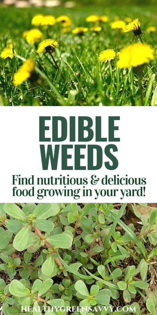 Weeds you can eat -- pin with photos of dandelions and purslane with title text