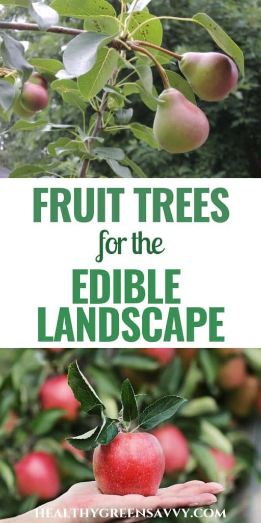 growing fruit trees -- photo of pears and apples ripening on tree with title text