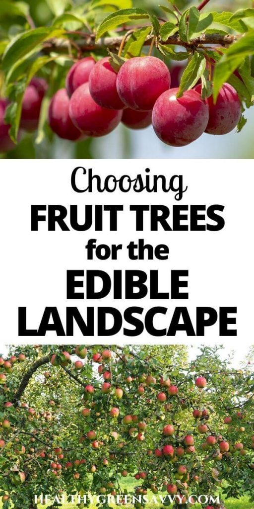 Growing Fruit Trees: photo of plums and apples ripening on tree with title text