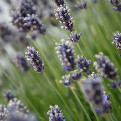 7 Remedies from Your Yard