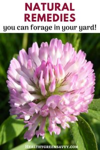 Natural remedies from your yard -- pin with title text and photo of red clover
