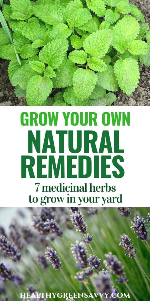 pin with title text and photos of lemon balm and lavender