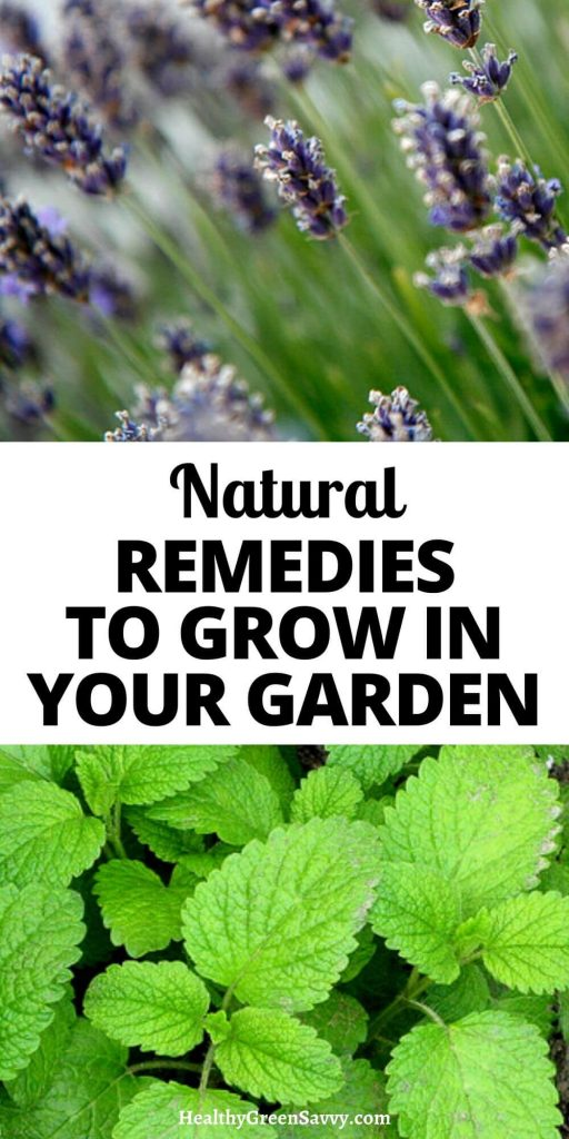 pin with title text and photos of lavender and lemon balm growing in garden