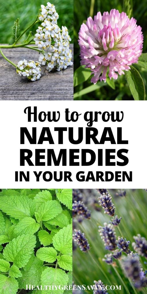 pin with title text and photos of natural remedies yarrow, red clover, lemon balm, and lavender