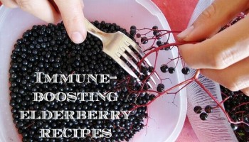 immune-boosting elderberries