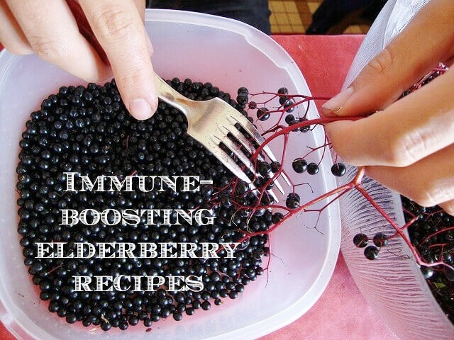 Benefits of elderberries: Immune-boosting elderberries are a tasty way to fend off illness. Check out these recipes for homemade tea, syrup, gummies, and more. Click to read more or pin to save for later!