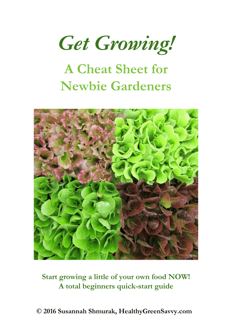guide for newbie gardeners