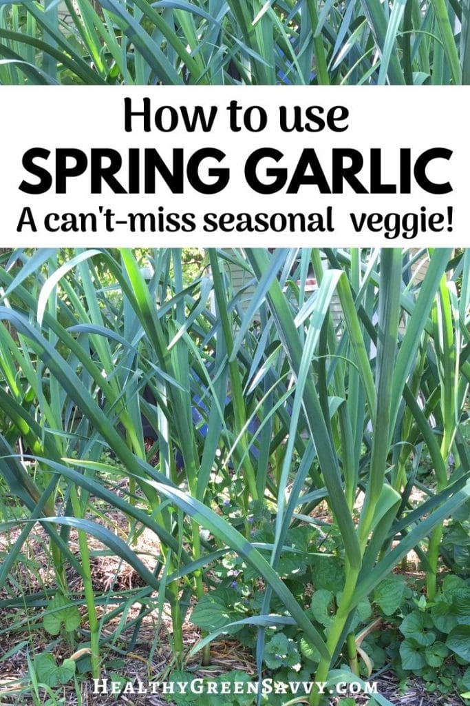 pin with title text and photos of spring garlic growing