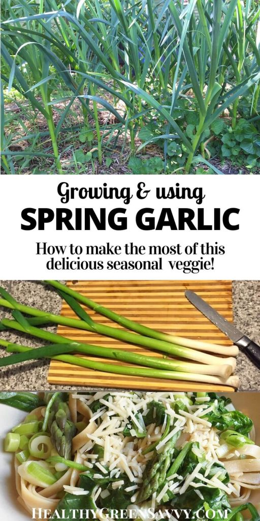 pin with title text and photos of garlic growing, green garlic on cutting board, and green garlic with other spring veggies over pasta