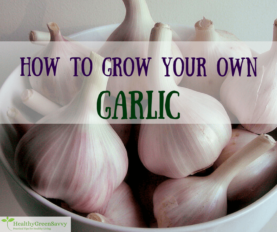 How to Grow Garlic (& Why You'd Want To)