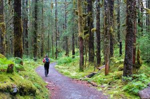 you can reduce cortisol by getting outside -- photo of hiker in woods