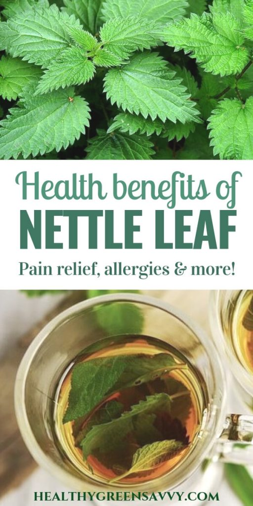 benefits of nettle tea -- pin with photo of nettle plant and leaves brewing in cup with title text