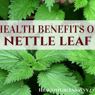 Nettle Leaf Tea Health Benefits