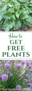 Get free plants! Don't pay a fortune for your garden -- you can get many plants for free. Here's how. | frugal gardening | save money | gardening tips | frugal |