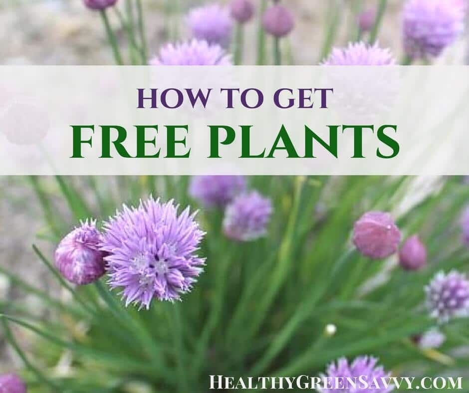 Don't spend a fortune on your garden — you can get a lot of plants for free using the strategies below