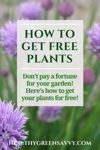 free plants-- photo of chives with title text overlay