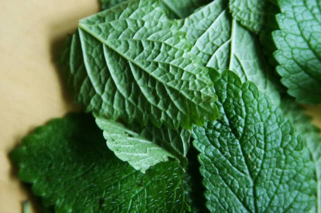 close up of lemon balm leaves