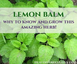 lemon balm uses: lemon balm leaves with text overlay