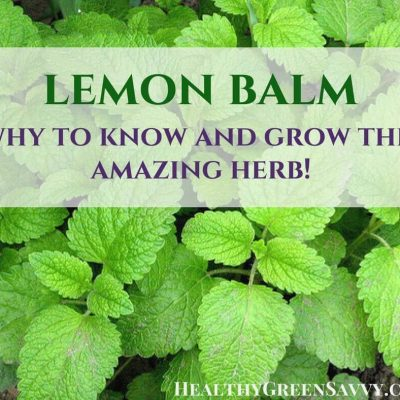 Uses for lemon balm: Lemon balm is an amazing herb that deserves a place in your garden and herbal remedy arsenal. | lemon balm uses | #medicinalplants | sleep tea | #herbalremedies | natural remedies | #bettersleep