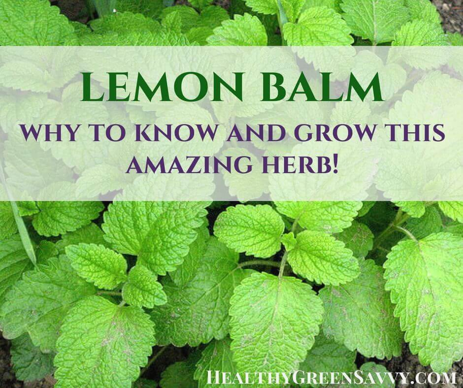 Uses for Lemon Balm, a Delicious Medicinal Herb