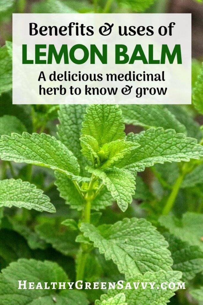 pin with photo of lemon balm growing and title text overlay