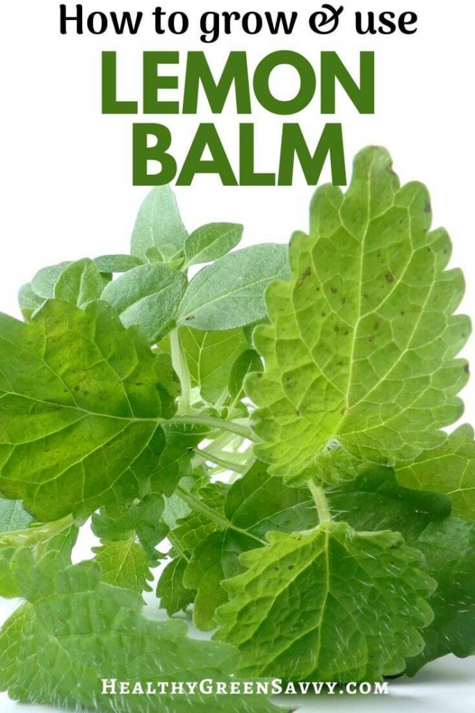 pin with photo of lemon balm leaves plus title text