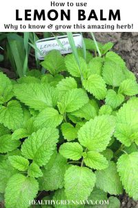 pin with photo of lemon balm growing in the garden and title textt