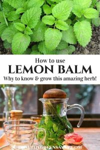 Lemon balm uses: pin showing lemon balm leaves and lemon balm tea brewing
