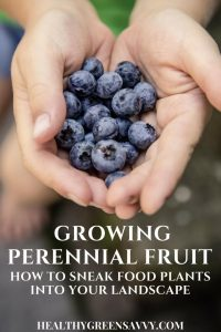 edible landscaping, growing fruit -- pin with photo of someone holding out handful of blueberries