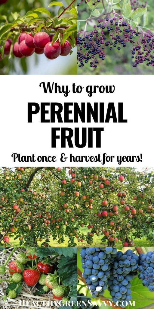 pin with title text and photos of perennial fruits growing (plums, elderberries, apples, strawberries, and grapes)