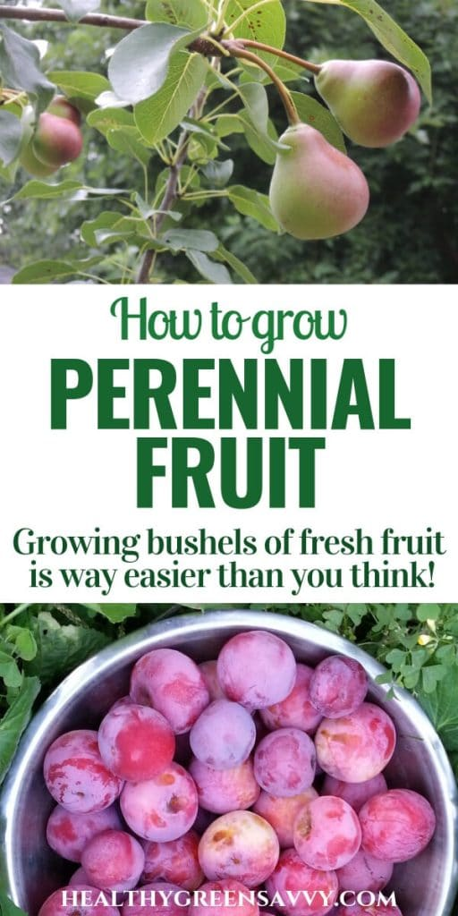 edible landscaping, growing fruit -- pin with photos of pears growing on trees and fresh-picked plums in bowl