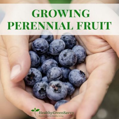 Why You'll LOVE Growing Your Own Fruit