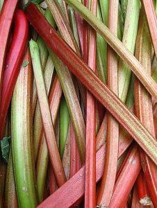 homemade fruit leather rhubarb -- photo of rhubarb stalks