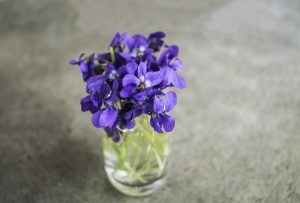 purple wild violets in small glass vase