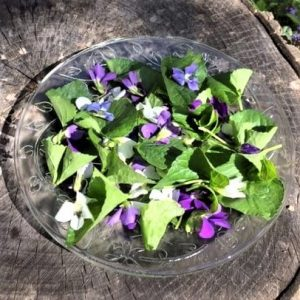 photo of edible wild violets leaves and flowers on plate