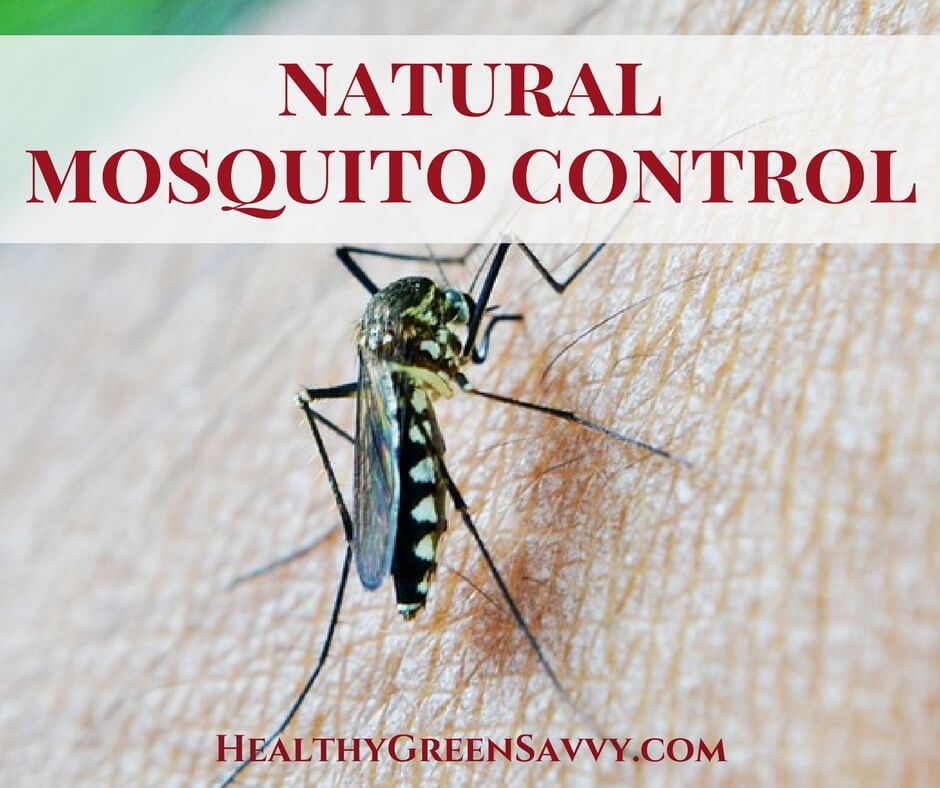 Natural Mosquito Control ~ An Effective, Non-Toxic Solution!