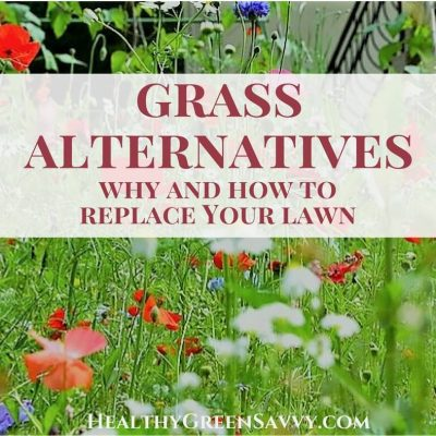 Grass alternatives save you money, time, and water, while reducing greenhouse gas emissions. Find out how easy it is to convert some of your lawn to grass alternatives! | eco-friendly gardening | ecological landscaping | green living tips |