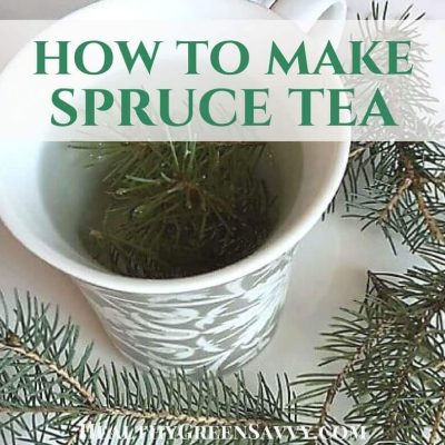 Spruce tea is a delicious medicinal brew you can make even in the dead of winter. Learn why you might want to start sipping this tasty foraged tea regularly! #foraging #wildedibles #naturalremedies #herbaltea