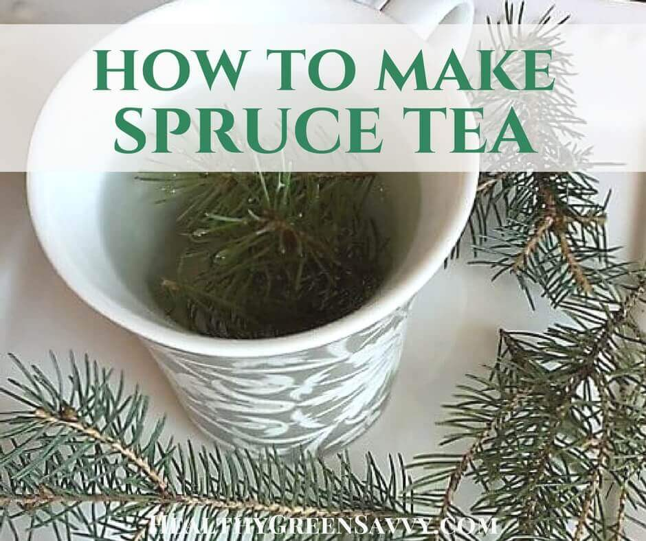 Spruce Tea ~ A Delicious Way to Fight Colds!