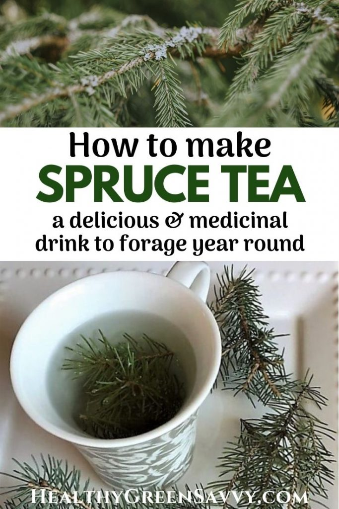 pin with photos of spruce branch and spruce tea brewing and title text