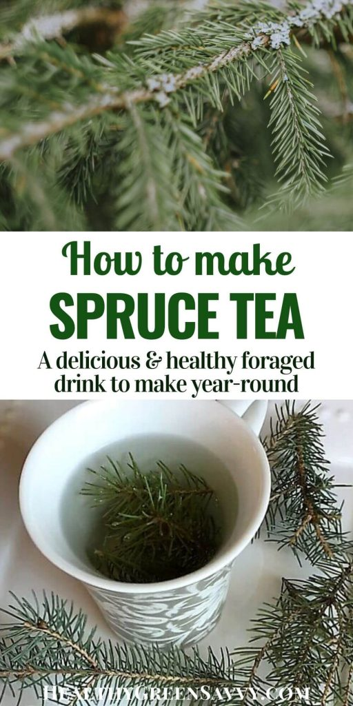 Spruce tea -- pin with photo of spruce needles and tea cup brewing spruce tea