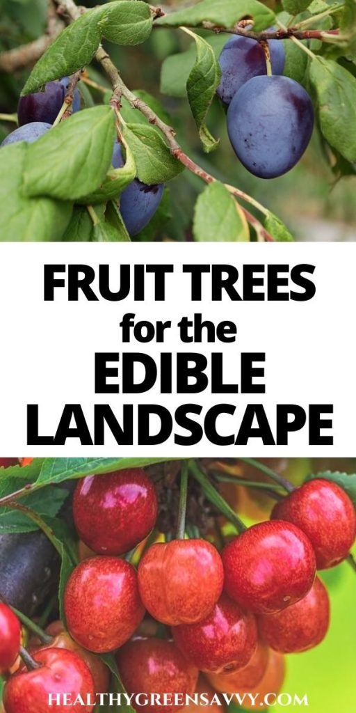 pin with title text and photots of plums and cherries growing on trees in edible landscaping