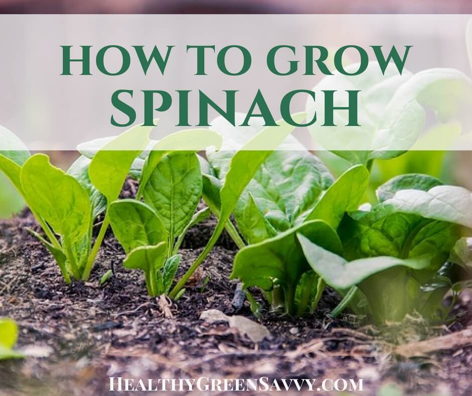 How to Grow Spinach (& Why You'd Want To)