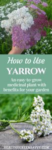 Yarrow Uses ~ Easy-to-grow yarrow has numerous medicinal uses inside and out, plus it's a beautiful and eco-friendly garden plant. Find out how to use yarrow for cuts, fevers, and more! #medicinalplants #yarrowbenefits #herbalremedies #xeriscaping #pollinatorfriendlygardening